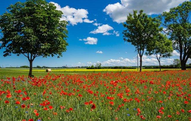 (Foto: Bernd Kasper / www.pixelio.de)